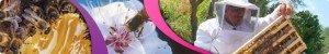 Pétition pour une protection de l'apiculture et des consommateurs face au lobby des OGM dans Environnement image0011-300x50