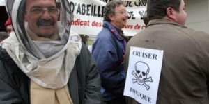 Apiculture : Pour l'interdiction immédiate du pesticide Cruiser OSR dans Apiculture cruiser-300x150