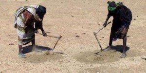 Récoltes insuffisantes, réduction des pâturages : le Sahel est à nouveau menacé par une crise alimentaire. dans AFRIQUE 264571_des-femmes-cherchent-des-graines-de-cereales-dans-le-sahel-le-30-novembre-2011-300x150