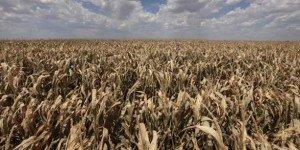 Le spectre d'une crise alimentaire plus grave qu'en 2008 dans AFRIQUE secheresse_0-300x150