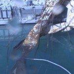Fukushima, à 2 doigts du pire ?  dans Japon 120913_03-150x150