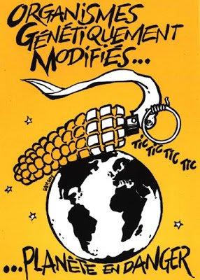 La commission européenne vient de démentir sa volonté de geler les procédures d'autorisation de cultures de nouveaux OGM dans Agriculture ogm-attention-danger